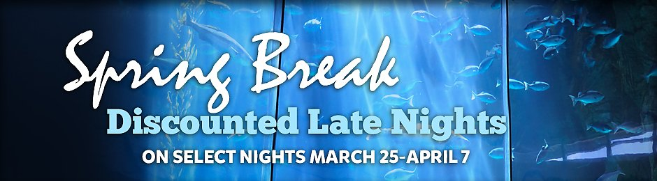 940x260-Spring-Break-Late-Nights-2018.jpg
